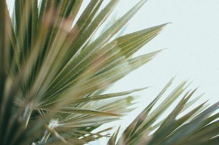 Desert Plants 2