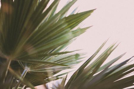 Desert Plants 3