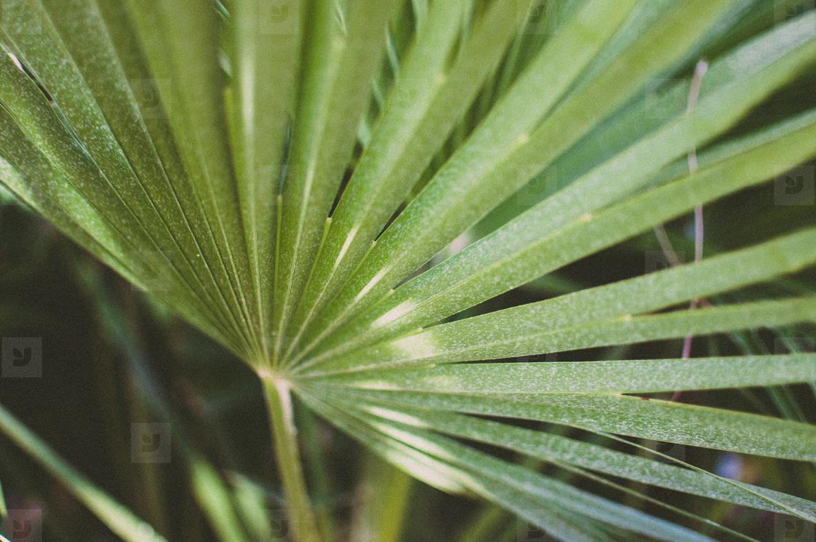 Desert Plants 1