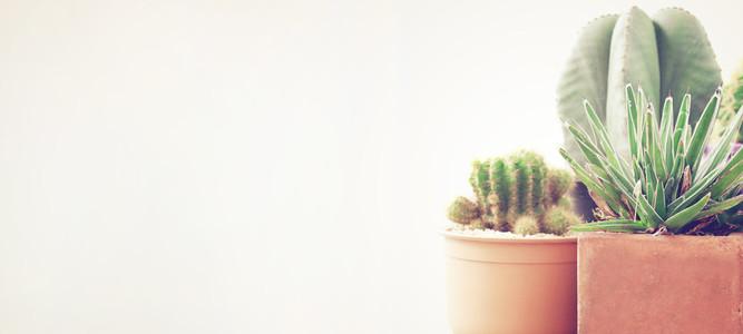 Various of cactus plant pot