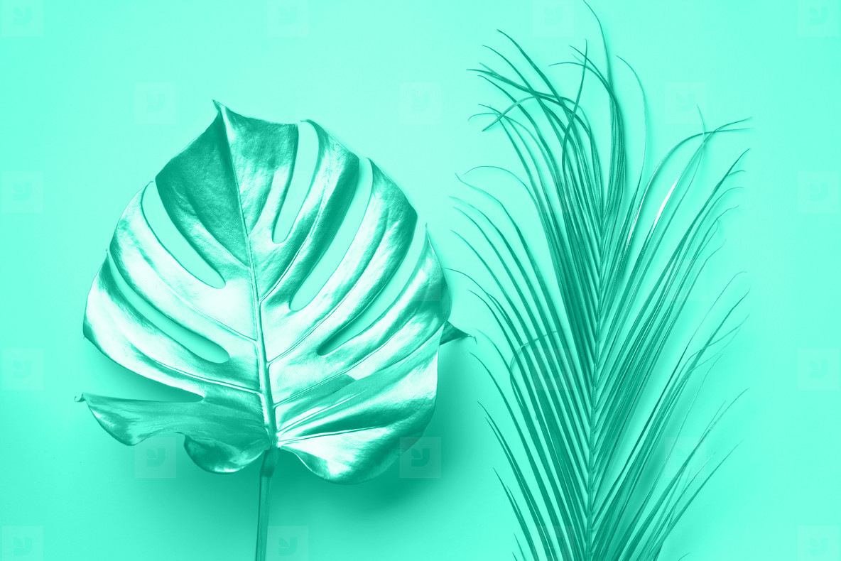 Exotic summer trend in minimal style  Tropical palm monstera leaf on mint color background  Trendy green and turquoise color  Shiny and sparkle design  fashion concept