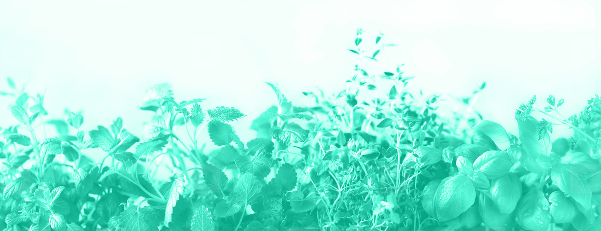 Green fresh aromatic herbs   melissa  mint  thyme  basil  parsley on neon color background  Banner collage frame from plants  Trendy green and turquoise color