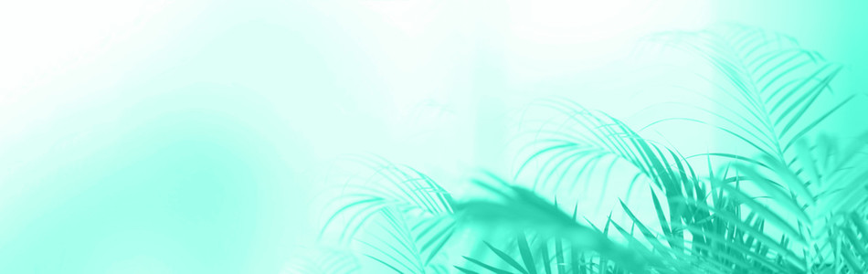 Summer travel concept  Shadow of exotic palm leaves is laying on mint color background  Banner with copy space  Trendy green and turquoise color