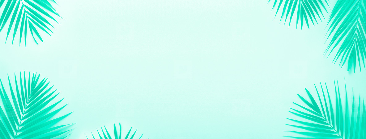 Tropical palm leaves on mint color background  Minimal summer concept  Trendy green and turquoise color  Top view green leaf on punchy turquoise paper  Banner