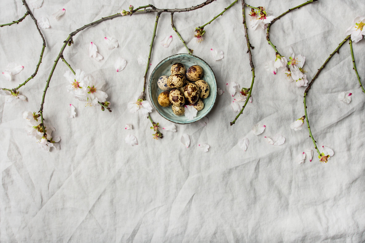 Easter flat lay with quail eggs and almond tree branches