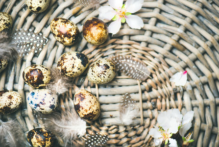 Natural colored quail eggs for Easter with flowers and feathers