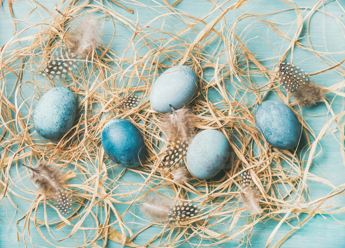 Blue painted traditional eggs for Easter holiday in hay
