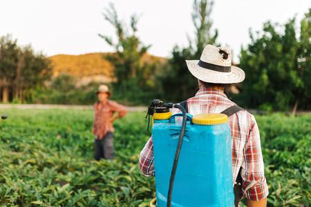 Young farmer spraying organic fertilizer with manual pump tank