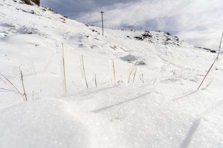 Frozen plants in ski resort of Sierra Nevada