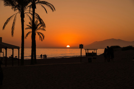 Palm Trees Silhouette At Sunset in the beach