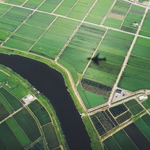 Aerial view of the rice filed