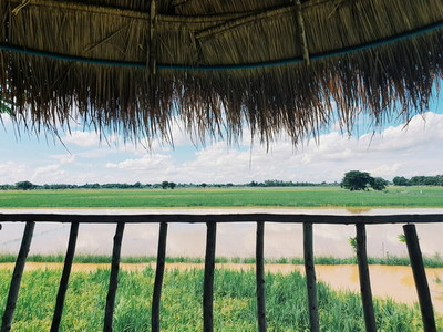 View of nature from straw roof
