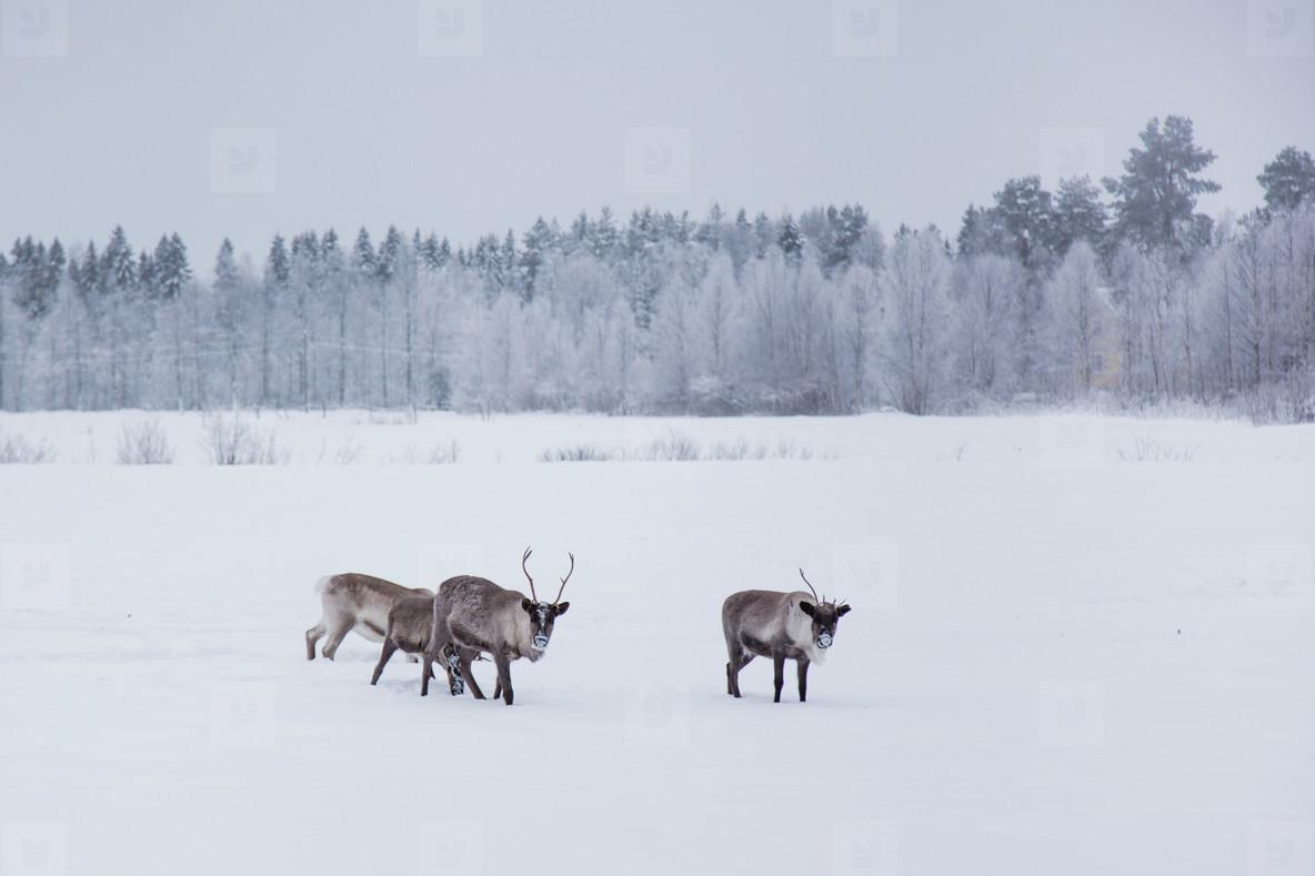 Lapland  Finland 9