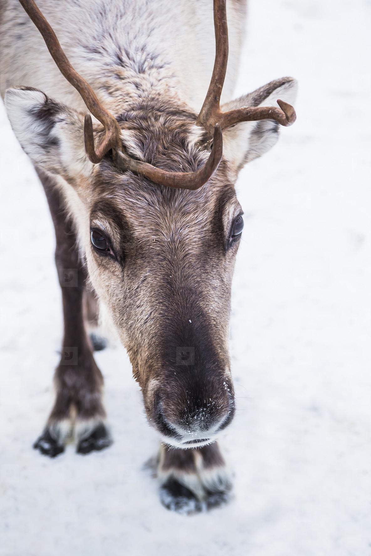 Lapland  Finland 13