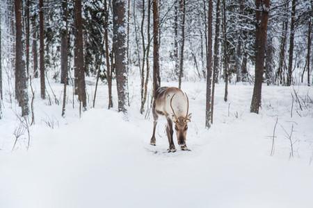 Lapland  Finland 11