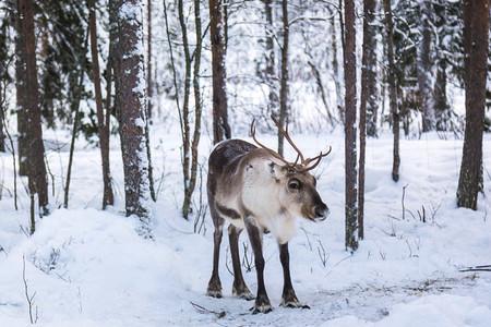 Lapland  Finland 42