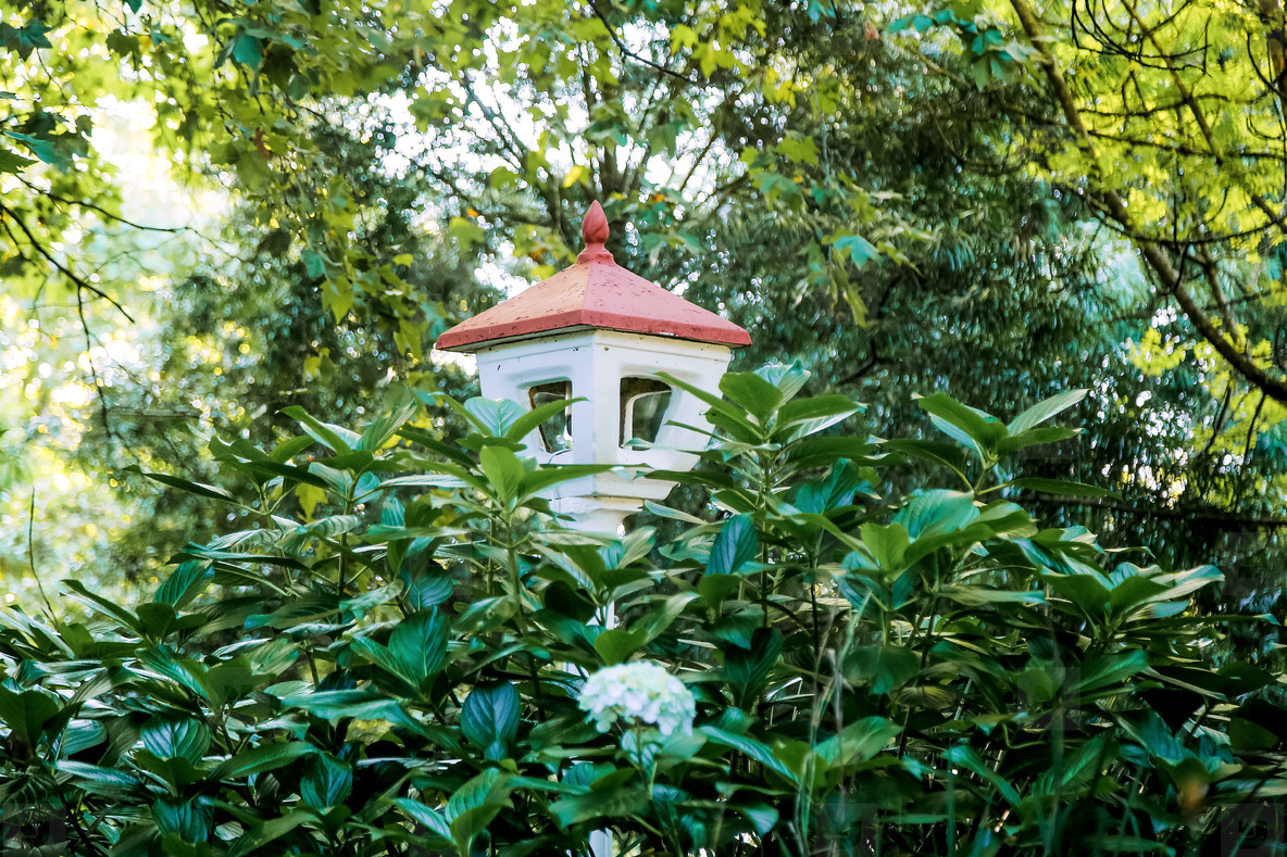 Buddhist Retreat Centre 17