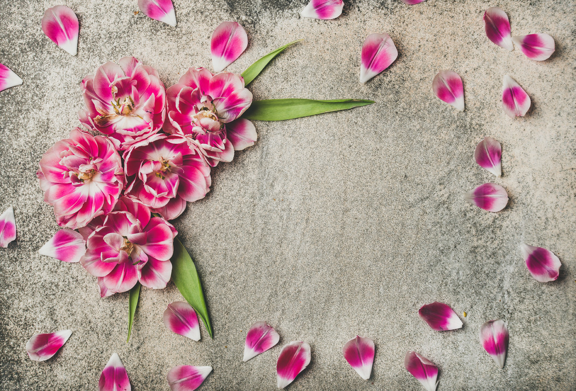 Flat lay of pattern frame made of pink tulip flower petals