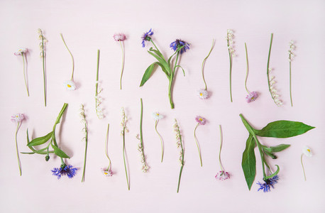 Flat lay of lily of the valley  cornflower  daisy and peony garden flowers in rows