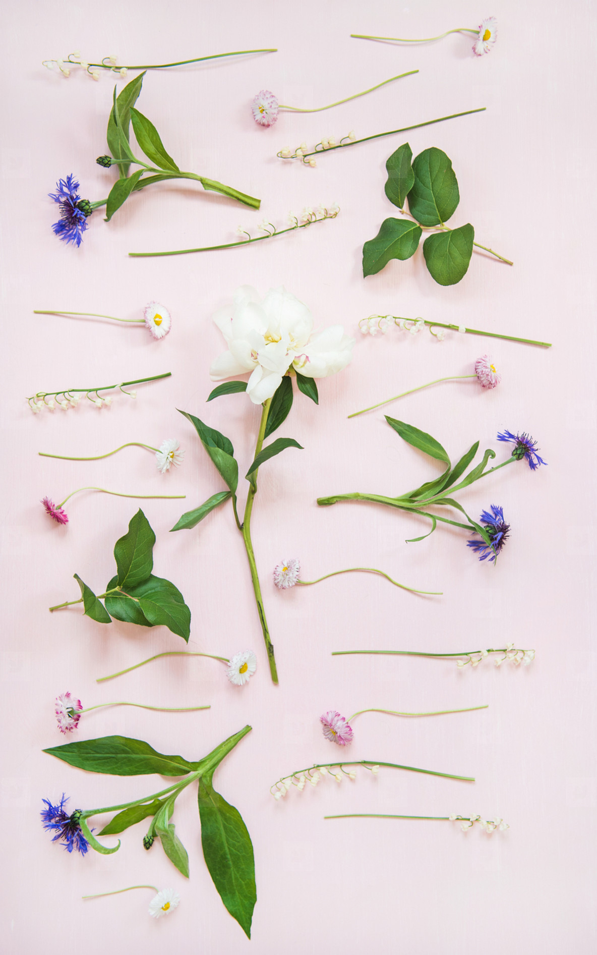 Flat lay of lily of the valley  cornflower  daisy and peony garden flowers  vertical composition