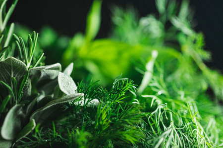 Macro photography of kitchen herbs like sage  rosemary  parsley  dill and basil