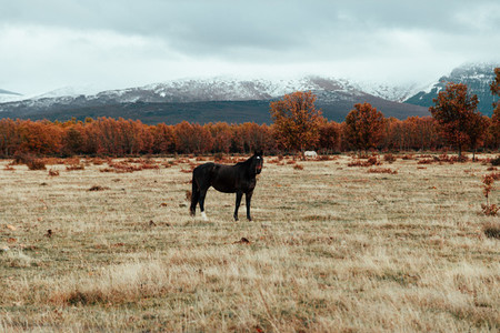 Wild horse in a grassland near a forest an mountains