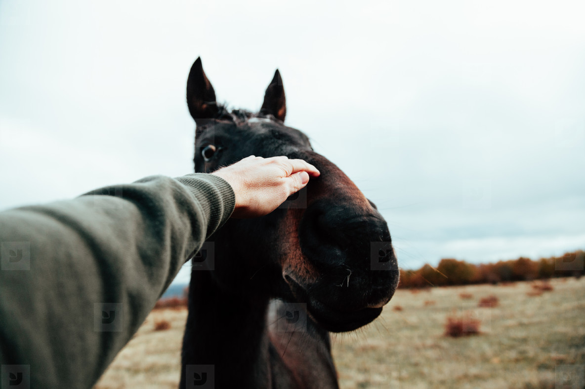 Close up of human hand touching horse in a grassland