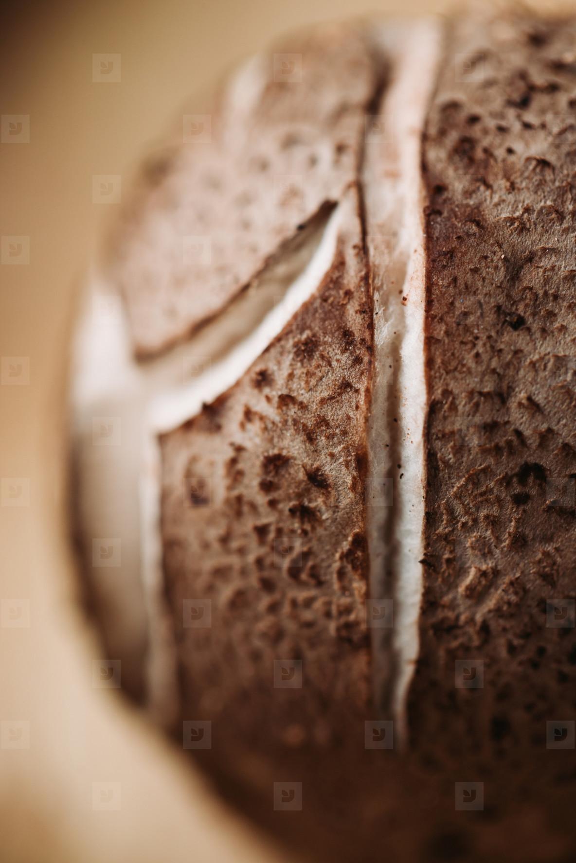 Macro photography of shiitake mushroom pileus  Creative food photography