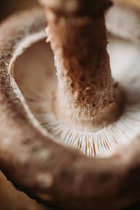 Macro photography of shiitake mushroom Creative food photography