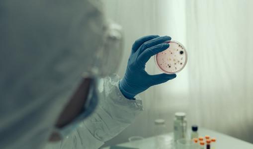 Scientist examining virus in petri dish in a laboratory