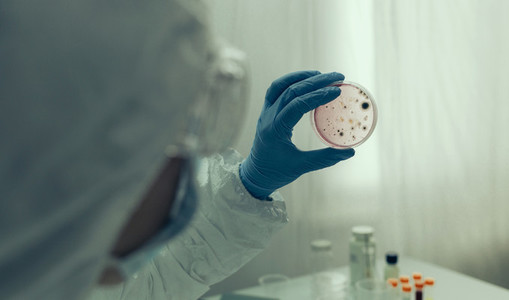 Scientist examining virus in petri dish in a laboratory
