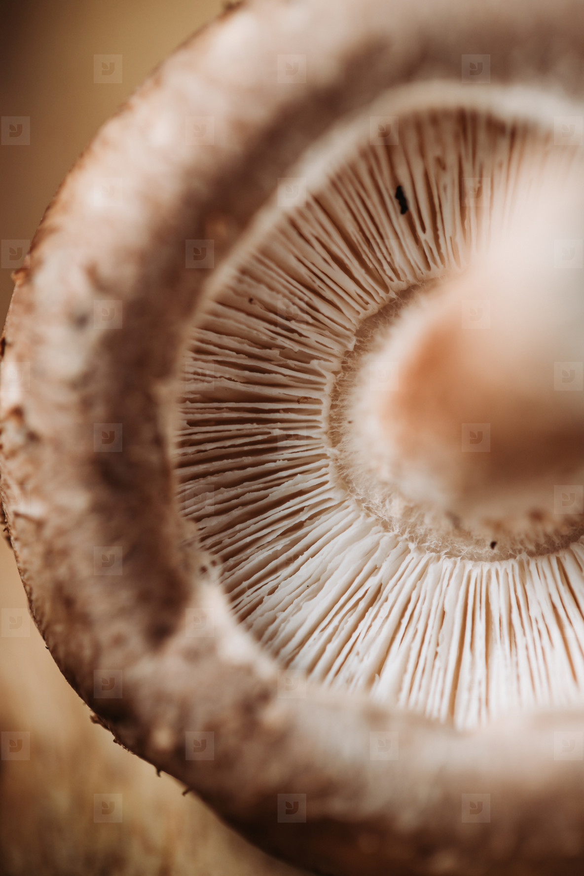 Macro photography of shiitake mushroom  Creative food photography