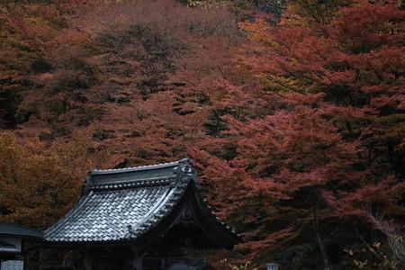 Autumn193103
