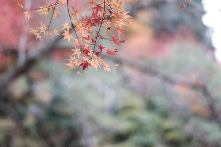 Autumn193114