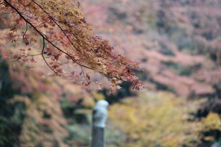 Autumn193118