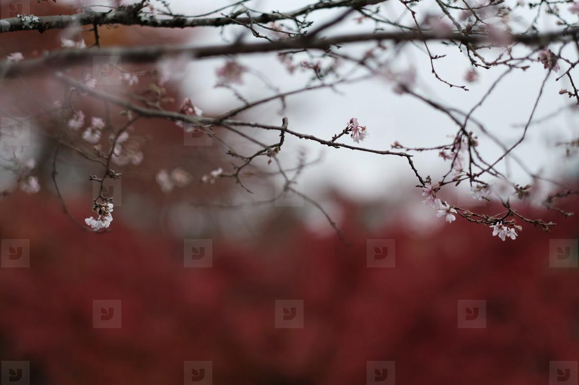 Autumn193123