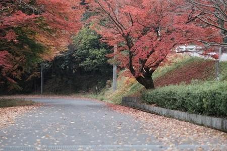 Autumn193124