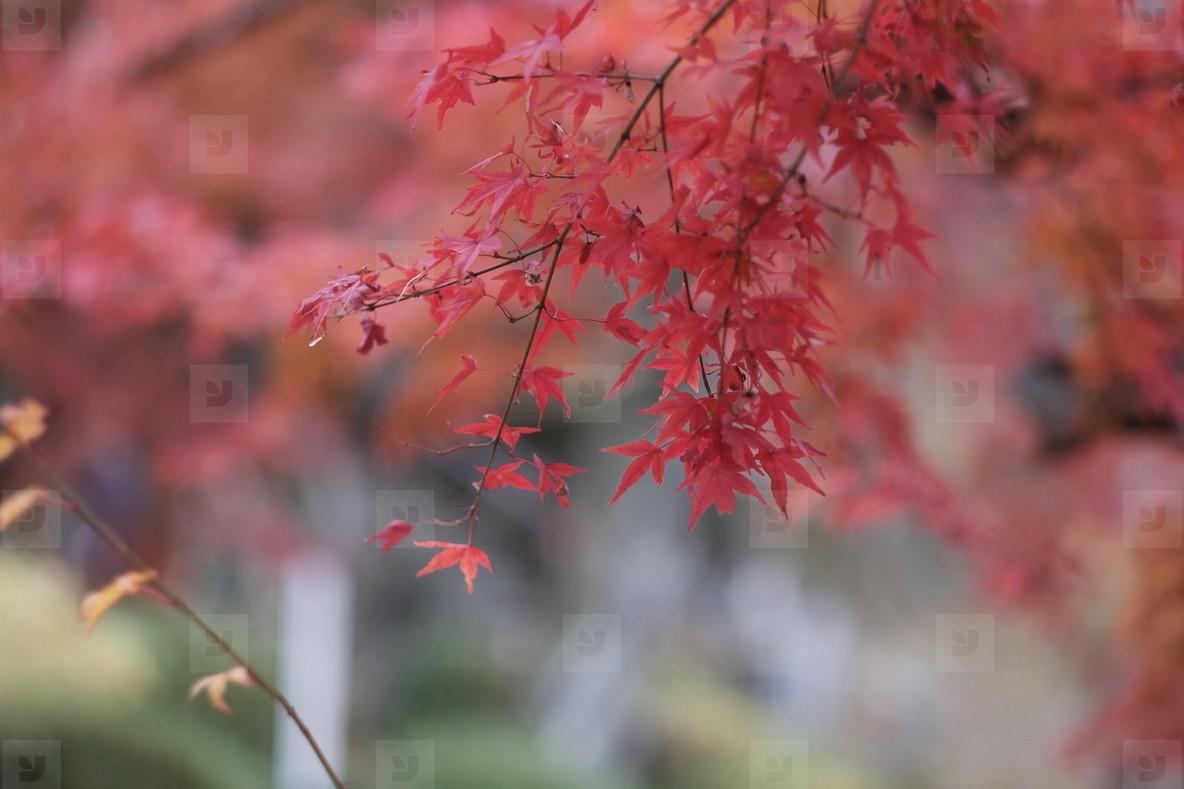 Autumn193125