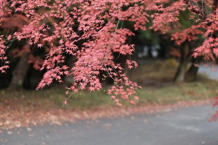 autumn193126