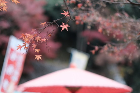 Autumn193628