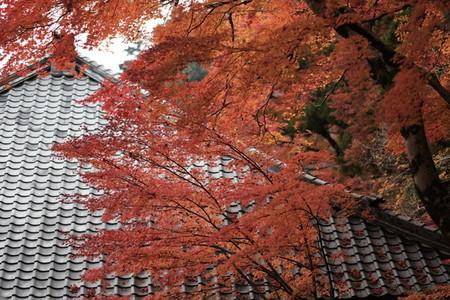 Autumn193654