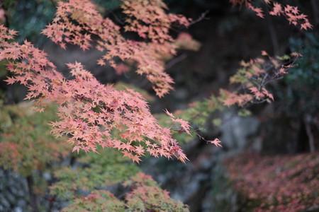 Autumn193659