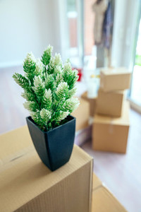 Plant and stacked boxes