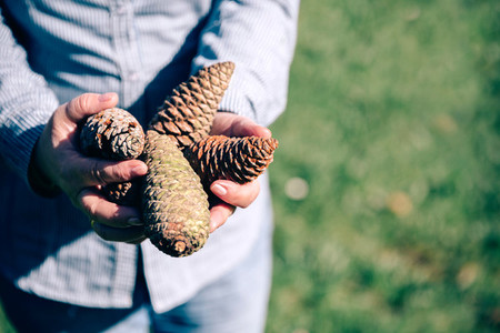 Senior woman holding pine cones in hands
