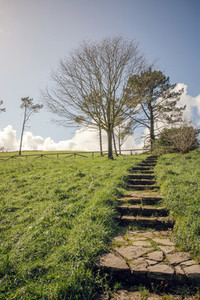 Stone stairs in grass with trees on background