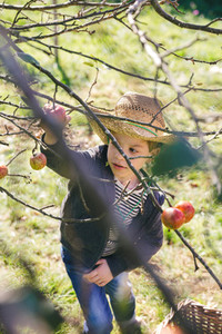 Happy kid with hat picking apples from tree