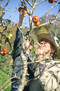 Senior man and kid picking apples from tree