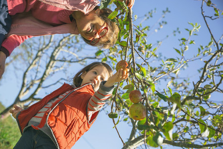 Senior woman and little girl picking apples from tree