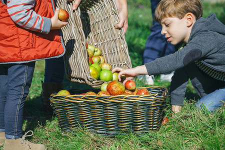 Children putting apples inside of basket with fruit