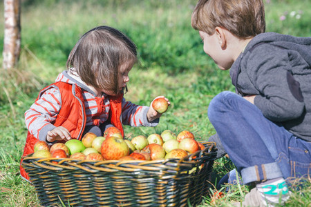 Children holding organic apple from basket with fruit